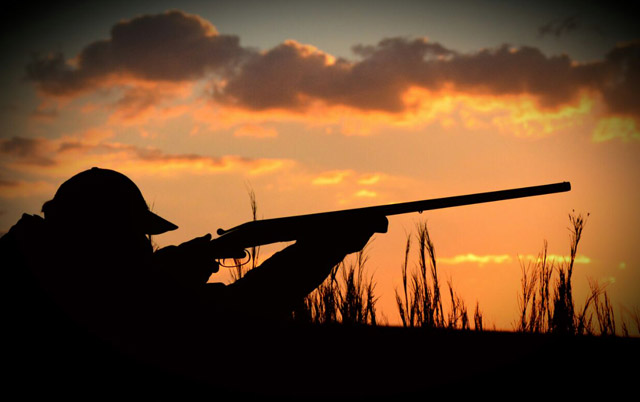 wingshooting photo gallery